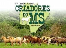 6º LEILÃO VIRTUAL CRIADORES DO MS